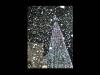 The Christmas tree in Joppa