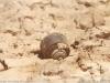 Landmine at Qaser al-Yahud.